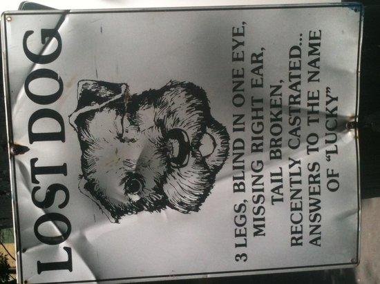 Hotel Roosevelt: foto en la condesa de lucky, se perdio estaba cerca del hotel!!!