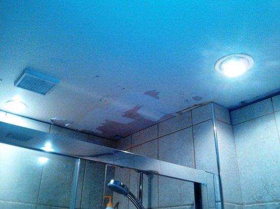 Langdale Bed and Breakfast: bathroom ceiling.
