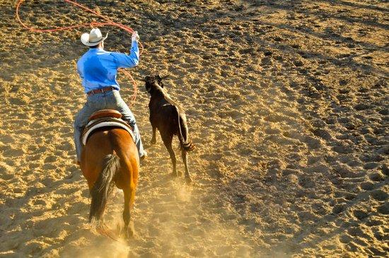 Alisal Guest Ranch & Resort : Wrangler Bill practicing his roping skills.
