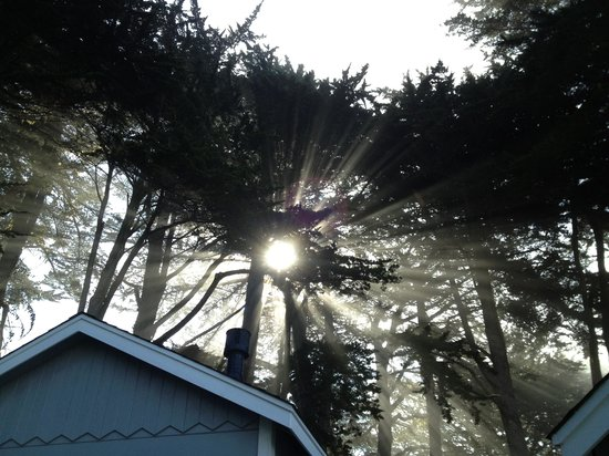 Sea Rock Inn: morning light coming through the trees over our cottage