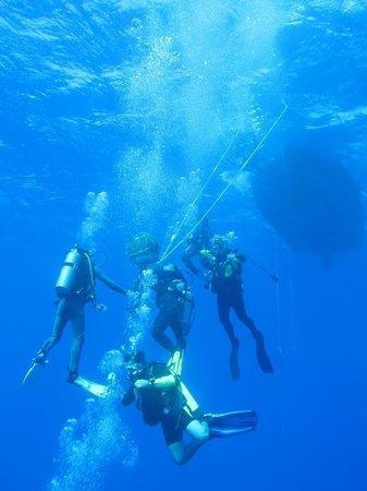 Hawaii Eco Divers & Surf Adventures: Mergulho Hawaii
