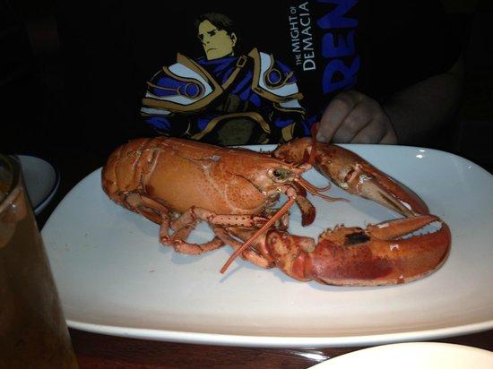 Red Lobster : Prato principal escolhida no viveiro