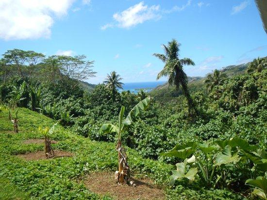 Island Eco Tours - Day Tours : Bush