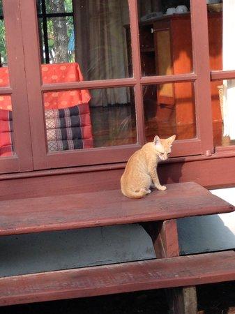 Supalai Pasak Resort Hotel: Cat at the entrance to the cabin