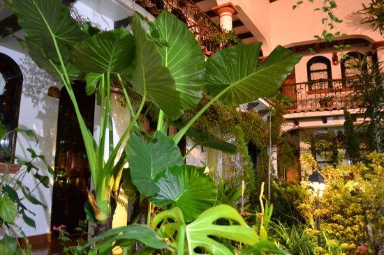 Hotel Posada Jovel : vegetación anfitriona