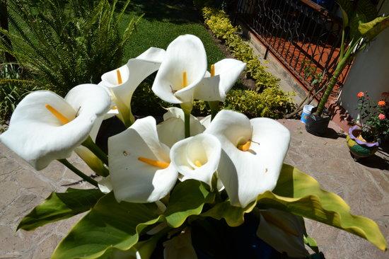 Hotel Posada Jovel : las flores preferidas de Diego Rivera