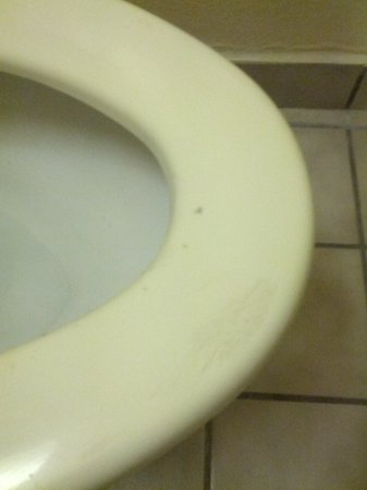 Ramada Pooler/savannah : stains on toilet seat