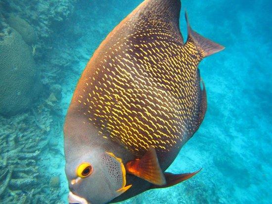 Sonrisa: Our fish friend:)