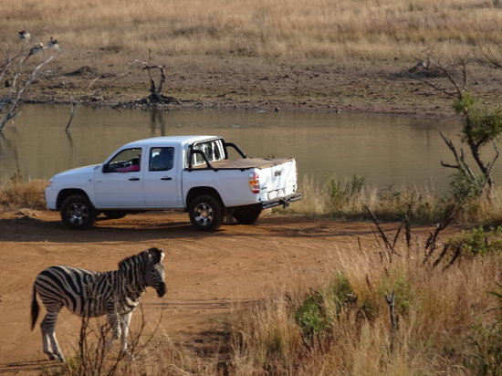 "Pilanesberg National Park: You won""t be disappointed..lots of animals"