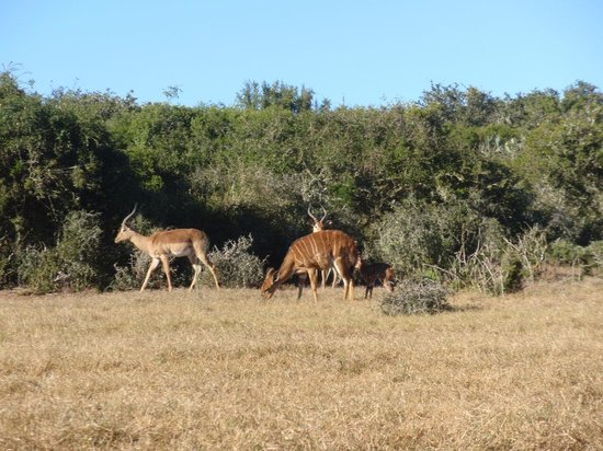 Addo Afrique Estate: Some of the animals in the lodge park