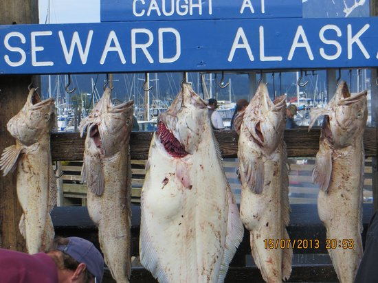 Seward Boat Harbor : Seward,  qui si pesca molto bene