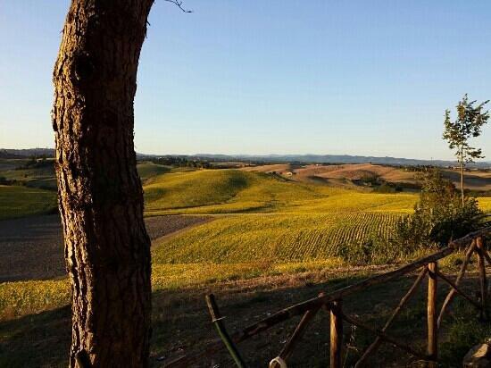 Belvedere Agriturismo : Landschaft