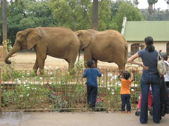 Provided by: National Zoological Gardens of South Africa