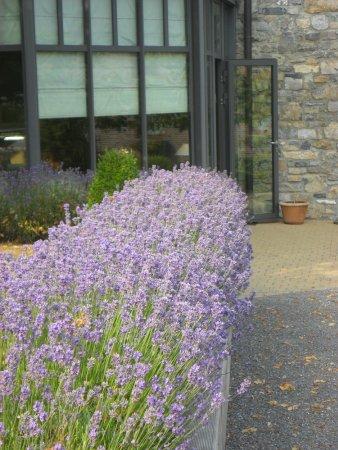 Jardin fleuri et terrasse - Picture of Lemonnier, Lavaux ...