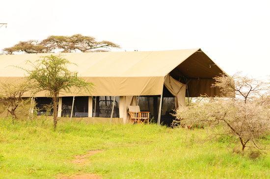 Serengeti Savannah Camps: Savannah Camp