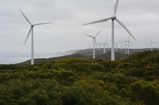 Albany Wind Farm: All along the coast