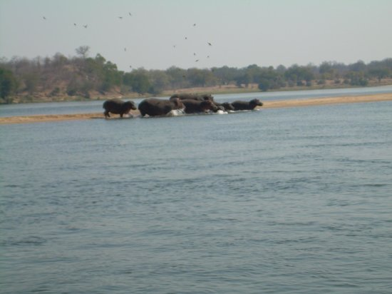 Lower Zambezi National Park: Ma guarda chi si vede!