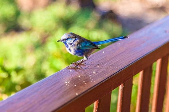 Clover Cottage Country Retreat: Blue Wren