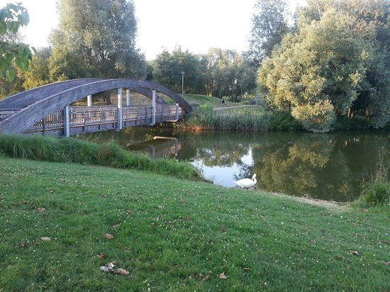 Kyriad Marne-la-Vallee Torcy : A park with swans and ducks we found nearby