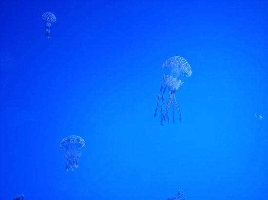 Ripley's Aquarium of the Smokies: More Jellys