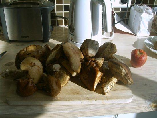 Egils Guesthouse: Pilze gefunden