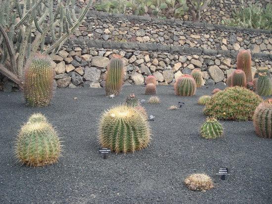 Jard n de cactus picture of jardin de cactus guatiza for Jardines con cactus
