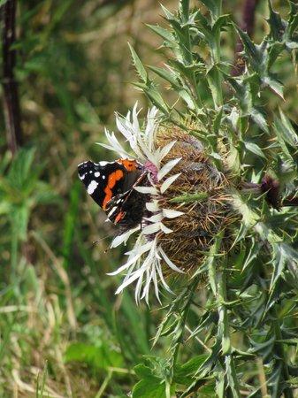 Rifugio Branchetto: la flora