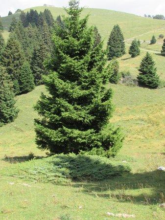 Rifugio Branchetto: paesaggio