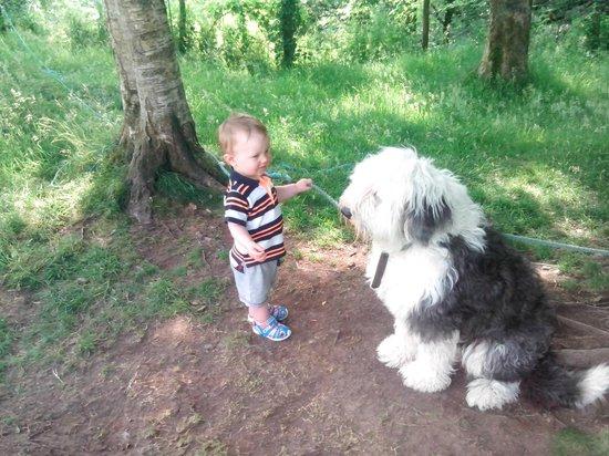 LMy sone playing with resident sheepdog at George Borrow Hotel, Ponterwyd, Wales