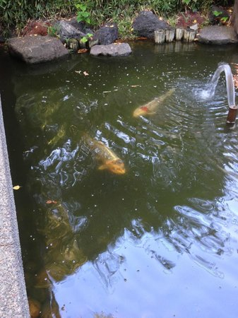 Dinah's Garden Hotel: Fish in the ponds