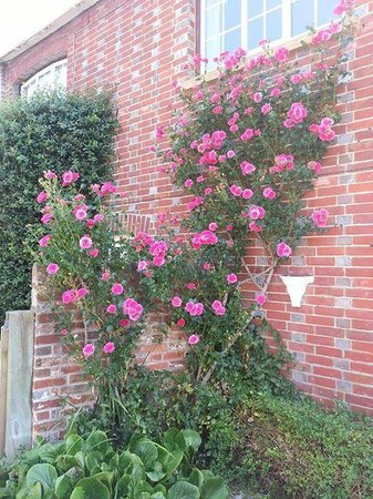 Bridge Farmhouse : climbing roses