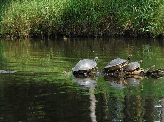 Karen's Kayaks : Should have been Turtle Creek instead of Turkey Creek