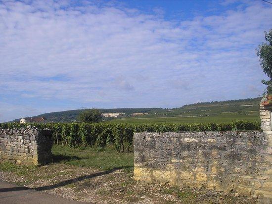 Olivier Leflaive : explications dans les vignes