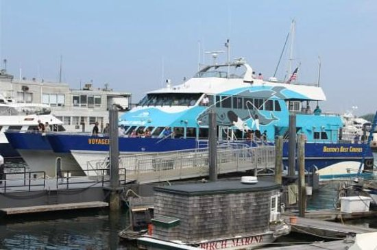 Whale Watch Ship Picture Of Bostons Best Cruises Boston - Cruises from boston