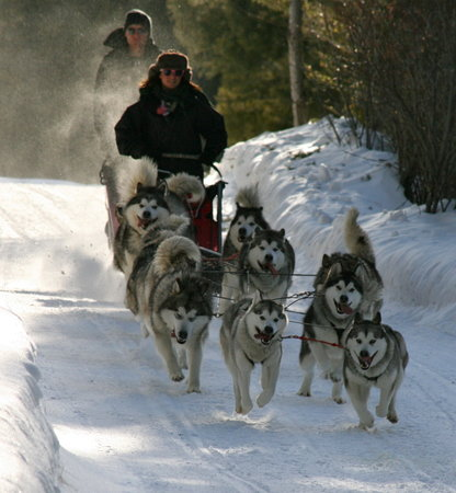 Pagosa Dogsled Adventures: getlstd_property_photo