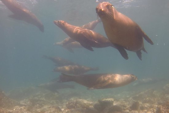 Bahia de Los Angeles, Mexico: Sea lions