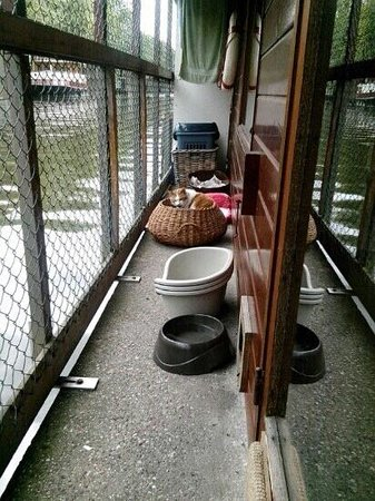 De Poezenboot: il gattile di Amsterdam.. molto bello una struttura galleggiante dove vivono più di 40 gatti.. t