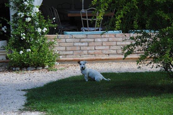Relais Ca' Maffio : l'adorable petit chien de la maison
