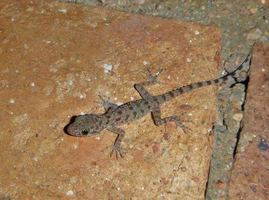 TUI Magic Life Sharm el Sheikh: Tiny lizard
