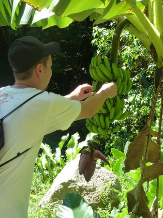 Fond Doux Plantation & Resort: Picking fruit on the property trails