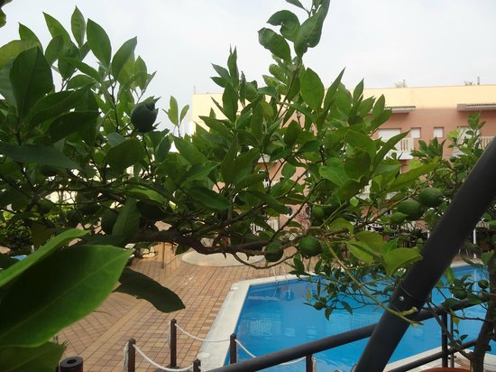 Alba Seleqtta Hotel: Limes growing by the pool