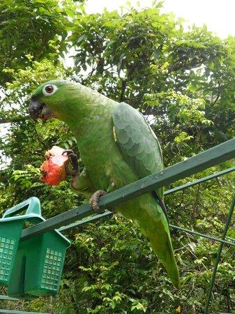 Hotel Paraiso Carlisa: Animal rehab unit