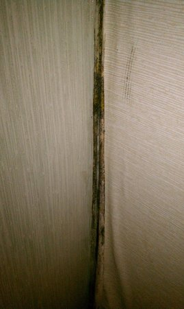 Seabonay Motel: PEELING WALLPAPER- POSSIBLY MOLD
