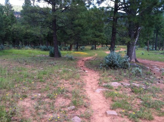 Mountain Meadows Cabins : Trail Through the Woods