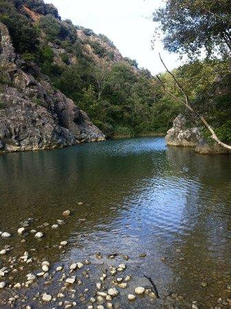 Foresta di Berignone: Il fiume Cecina