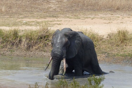 Leopard Hills Private Game Reserve: Elephant at the lodge waterhole