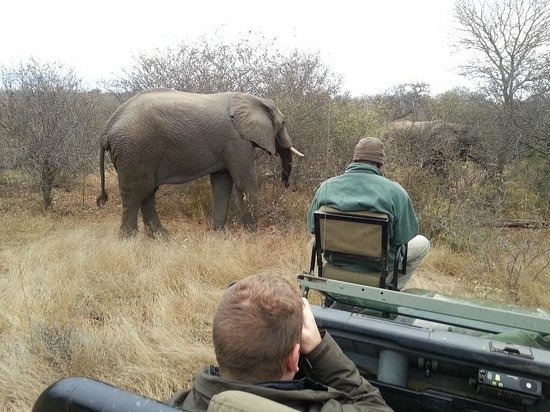 Toro Yaka Bush Lodge: Elephant sighting