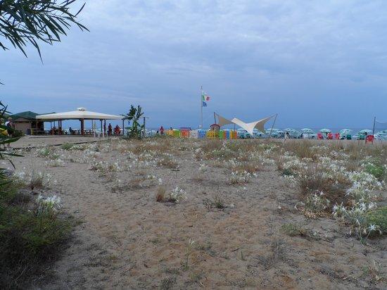 Villaggio Touring Marina di Camerota: Gigli sulla sabbia