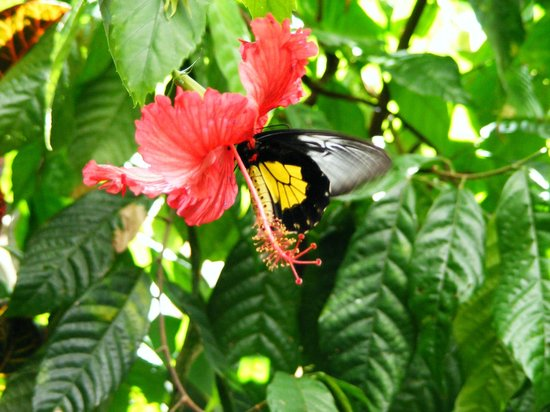Pacific Science Center: Beautiful Butterfly Garden