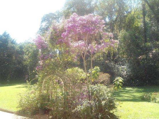 Pousada Da Alcobaca : Jardim